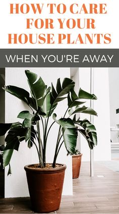 How do you care for your indoor house plant decor when you go on vacation or you're away? Here are tips for growing indoor house plants and keeping your indoor garden thriving whether you're home or not! Indoor Gardening Supplies, Container Gardening, House Plants Decor, Plant Decor, Big Plants, Indoor Plants, Gardening For Beginners, Gardening Tips, Landscaping Tools