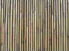 Bamboo Reed Fence