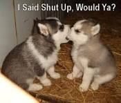 funnyPuppies - Google Search