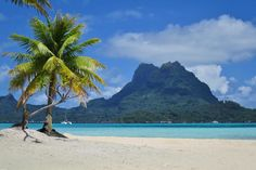 Find out how to receive a 10% discount on your next dive in French Polynesia with TOPDIVE in the article