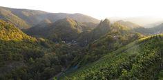 Weinberge östlich von Altenahr http://www.outdooractive.com/de/wanderung/ahrtal/ahrtal-auf-und-ab-zwischen-mayschoss-und-altenahr/103353082/?1421764934161#commentsNconditions  #Wandern #Berge #Weinberg #Sonnenuntergang #Outdooractive #Outdoor