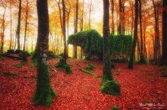 Forest creatures Extrañas formaciones en el hayedo encantado de #Urbasa