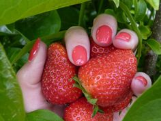 We #love #spring! #cndshellac #brisalitesmoothinggel #lobsterroll #naturalnails #instanails #strawberry #aardbeien #nagels #doetinchem #sentimento #cndcertifiedpro #certified #red #zomerkoninkjes #beauty
