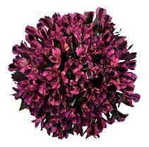 $ 44.88  - Alstroemeria - Purple - 50 Stems