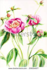 Image result for peony bud drawing Flower Artwork, Flower Prints, Japanese Flowers, Peony, Bud, Drawings, Plants, Image, Floral Patterns