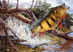 Bill Elliott, who was Bonefish & Tarpon Trust's 2008 Artist of the Year, has illustrated a total of 38 books and has traveled to many of the most beautiful Pretty Fish, Cool Fish, Crappie Fishing, Kayak Fishing, Fishing Shirts, Underwater Art, Underwater Photography, Pesca Sub, Peacock Bass