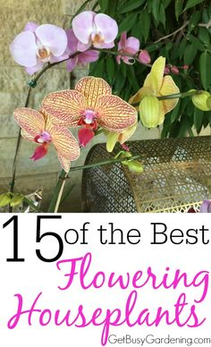 I love houseplants, but I don't have any that flower inside. How great would it be to have flowers through the winter! I'm going to add a few of these to my collection for sure!