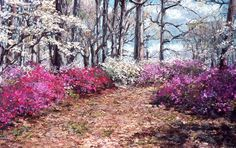 Garden in the Wood 4  Yet another painting I created as a series from one spring's wonderful display of azaleas, dogwoods and m ore. This was very inviting and I walked for hours enjoying this location.  20x32 in. | Soft Pastel on Museum   http://www.ldianejohnson.com/gallery/garden-in-the-wood4.shtml