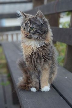 cute kitten.