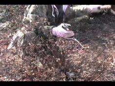 Pruning: Spirea