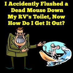 I Accidently Flushed A Dead Mouse Down My RV's Toilet, Now How Do I Get It Out?... Read More: http://www.everything-about-rving.com/i-accidently-flushed-a-dead-mouse-down-my-rvs-toilet-now-how-do-i-get-it-out.html Happy RVing! #5thwheel #gorving #findyouraway #rvlife #rving #rv #rvs #rvers #tailgating #classbrv #toyhauler #campervan #rvliving #camplife #fulltimerver #roadtrip #travel #tenttrailer #snowbird #camping #rvpark #hiking #motorhome #motorhomes #traveltrailer #popuptrailer…