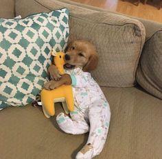 Golden Retriever Puppies Cute puppy snuggle cuddle dress up pajamas pjs toy stuffed golden retriever couch Super Cute Puppies, Cute Baby Dogs, Cute Little Puppies, Cute Dogs And Puppies, Cute Little Animals, Cute Funny Animals, Cute Babies, Doggies, Tiny Puppies