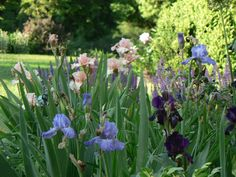 A Gardening Team Ready for Spring | Fine Gardening
