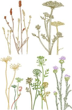 Anna Bove Embroidery Machine Embroidery Designs News: Savage Of Plants Guest Towels Special Free Motion Embroidery, Ribbon Embroidery, Embroidery Art, Cross Stitch Embroidery, Machine Embroidery Designs, Embroidery Patterns, Kurti Embroidery, Simple Embroidery, Botanical Line Drawing