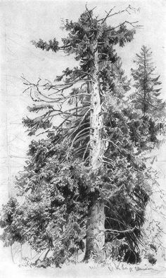 Ink Drawing Ivan Ivanovich Shishkin - Spruce, Paper, graphite pencil, 48 x 30 cm. The Russian Academy Of Fine Arts Museum, St. Landscape Sketch, Landscape Drawings, Cool Landscapes, Landscape Art, Graphite Drawings, Pencil Drawings, Art Drawings, Gravure Illustration, Russian Landscape