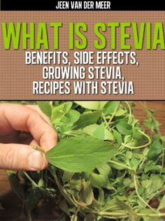 What is Stevia? Discover its Benefits for Diabetics, Side Effects, Growing Stevia and Recipes with Stevia...