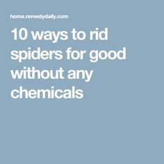10 ways to rid spiders for good without any chemicals