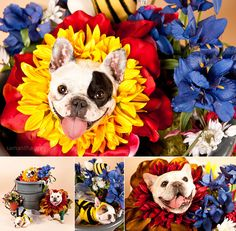 FLOWER FRENCHIES!