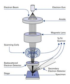 Labelled artwork showing how a scanning electron microscope sem electronic microscope principle recherche google ccuart Choice Image