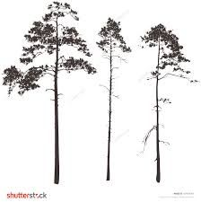 pine vector - Google'da Ara