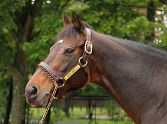 Deep Impact, son of Sunday Silence who won the Japanese triple Crown and is now one of the world's best sires