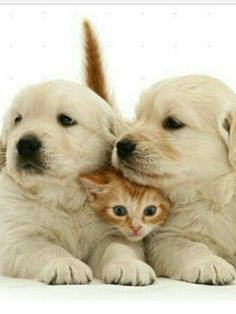 Cute Animals With Funny Captions, Funny Cat Pictures, Cute Animal Pictures, Cute Baby Animals, Cute Cats And Dogs, Cool Pets, Baby Puppies, Cute Puppies, Image Chat
