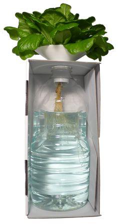 Cool BottleCrop Der Salat aus der Flasche BottleCrop ist das kleinste hydroponische Urban Farming