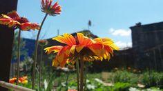 #flowers #orange #sunnyday #my📷 😇 Sunny Days, Orange, Flowers, Plants, Photos, Photography, Pictures, Photograph, Fotografie
