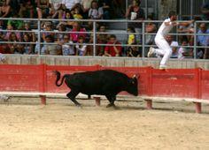 Spectacle garanti avec la Course Camarguaise Spectacle, Flamingo, Animales, Taurus, Tourism, Horse