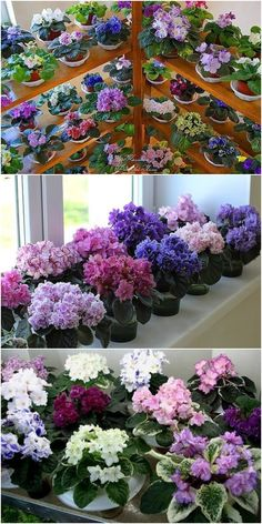 Houseplants for Better Sleep - . Garden Plants, Indoor Plants, Kalanchoe Blossfeldiana, Organic Horticulture, Saintpaulia, Little Flowers, Flower Boxes, Houseplants, Container Gardening