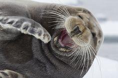 animal laughing - Buscar con Google