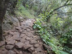 /\ /\ . Kalalau Trail, Kauai