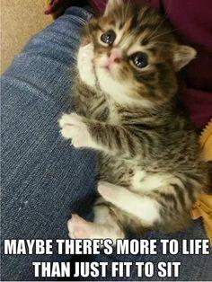 Contemplative kitty...