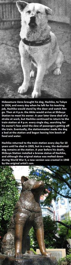 Hachiko, the good dog. His years of loyalty are the purest example of love and devotion to his Guardian.