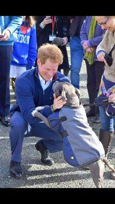 Amstaff Terrier, Pitbull Terrier, Bull Terriers, Rottweiler Training, Rottweiler Puppies, I Love Dogs, Cute Dogs, Pitbulls, Nanny Dog