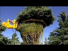 Výsadba stromov. Ako peracidity strom stroj. Mega-stroje