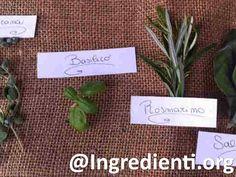 Le erbe aromatiche sono semi, frutti, radici, cortecce o sostanze vegetali usate in per dare sapore e profumo ad un alimento.