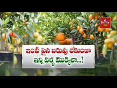 ఇంటి పైన బరువు లేకుండా ఇన్ని పళ్ల మొక్కలా...! || Terrace Gardening | hmtv Agri - YouTube Garden Landscaping, Strawberry, Lazy Susan, Landscape, Fruit, Vegetables, Plants, Recipes, Gardening