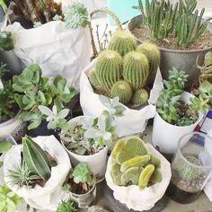 #VogueHotSpot  <보그>가 직접 방문하고 추천하는 #보그핫스팟 망원동에 위치한 #광합성 (@gwang_hab_sung)! 이름에 걸맞게 초록 식물들로 가득찬 싱그러운 카페입니다. 이번 주말엔 한 접시 가득 채울만큼 큼직한 프렌치 토스트로 브런치를 즐기며 건강한 광합성을 해보면 어떨까요? 서울 마포구 월드컵로19길 8 _ Visit cafe #Gwanghabsung located in #Mangwondong to enjoy brunch in a space filled with green plants. #Vogue #VogueKorea #首尔 #咖啡厅 8 WorldCup-ro 19-gil Mapo-gu Seoul  via VOGUE KOREA MAGAZINE OFFICIAL INSTAGRAM - Fashion Campaigns  Haute Couture  Advertising  Editorial Photography  Magazine Cover Designs…