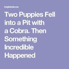Two Puppies Fell into aPit with aCobra. Then Something Incredible Happened