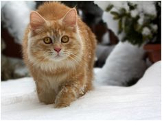 Polar Linus