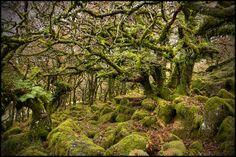 Wistman's Wood Dartmoor | 6th November | Flickr - Photo Sharing!