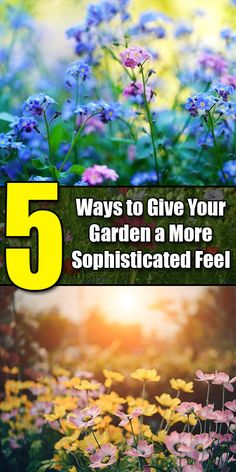 Love Photos, Cool Pictures, Decorative Garden Stones, Exotic Plants, Fruit Trees, Perfect Photo, Water Features, 5 Ways, The Funny