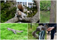 4 Squirrels by GorgeousPhotos on Etsy, $5.00