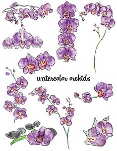 Watercolor orchid sketches for custom stationery project. #illustrations #art #stationery