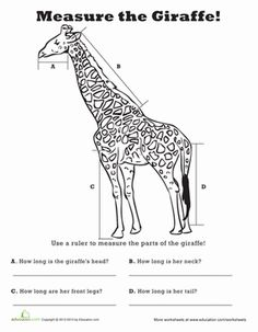 Second Grade Measurement Fractions Worksheets: Measure Length: Giraffe!