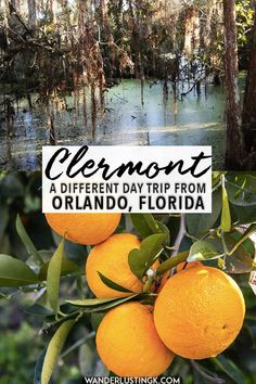 21 Best Clermont Florida images