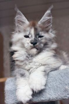 Remarkable >> Beautiful Cats Pics Free Download #cool