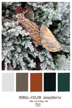 Frosty tones with Juniper and autumn leaves and mixed color palette. Colour Pallete, Colour Schemes, Wedding Color Schemes, Color Palettes, Color Combos, Color Blending, Color Mixing, Color Pop, Master Bedroom Redo