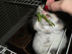 feeding him lettuce Lettuce, Rock, Cats, Animals, Gatos, Animales, Animaux, Skirt, Locks